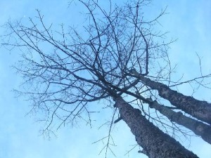 tree_without_leaves